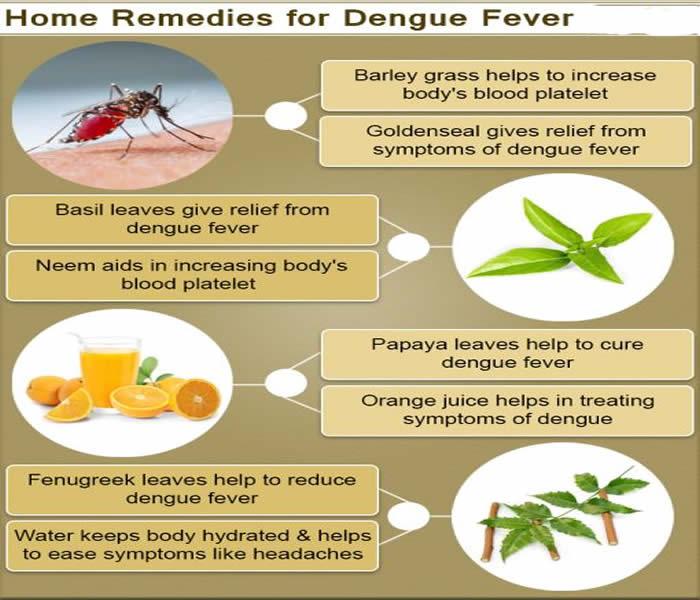 Best Natural Medicine For Dengue