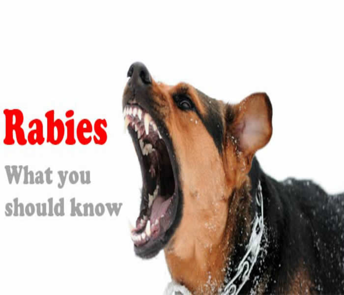 rabies virus causes symptoms treatment diagnosis and  rabies dog