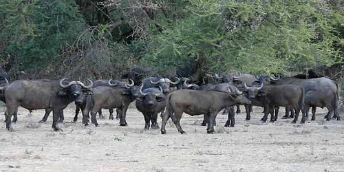 Image result for OKOMU NATIONAL PARK